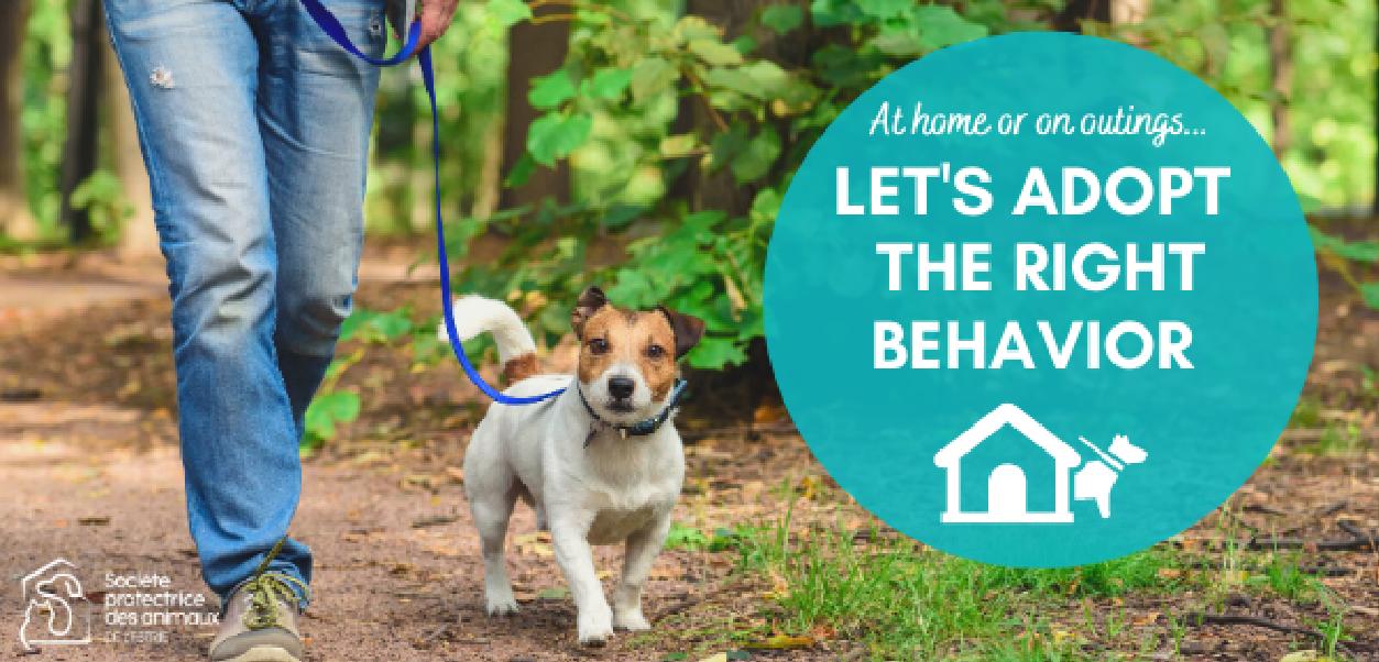 The SPA de l'Estrie asks for the collaboration of dog guardians