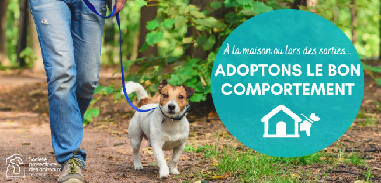 La SPA de l'Estrie demande la collaboration des gardiens de chiens