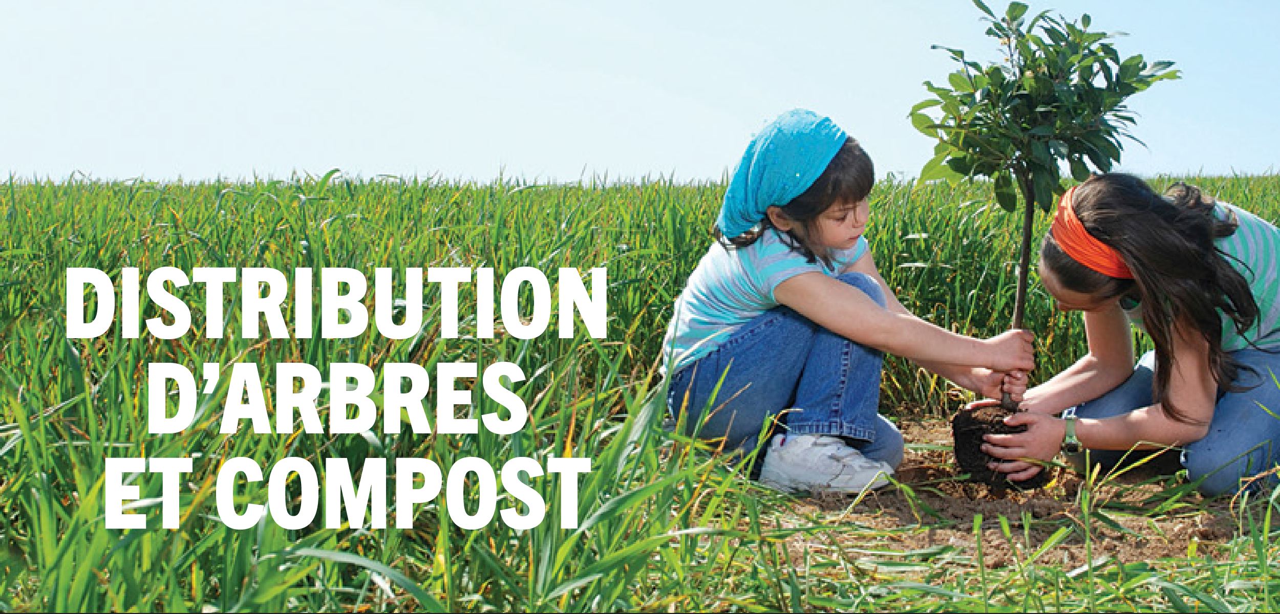 Distribution d'arbres et compost