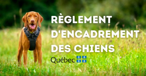 Règlement d'encadrement des chiens